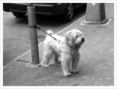 Tied_up_dog(1)
