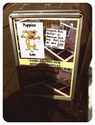 Pet Shop 3