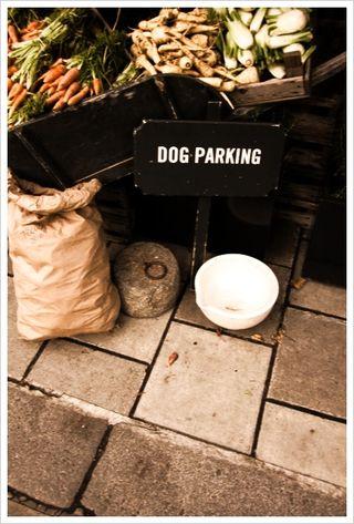 Dog parking