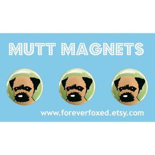 Border Terrier magnets