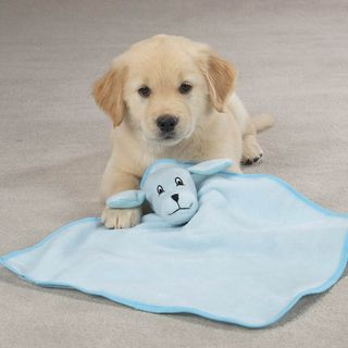 Puppy with baby blanket