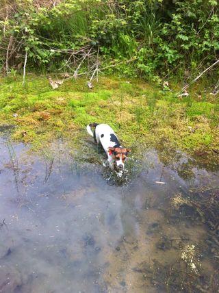 Puppy swimming