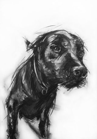 bird and beast drawing of labrador